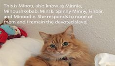 Our Users Tell Us The Story Behind Their Cats Nicknames