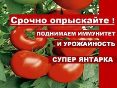YouTube Vegetable Garden, Garden Plants, Grafting Plants, Small Farm, Plantar, Farm Gardens, Diet And Nutrition, Soda, Stuffed Peppers