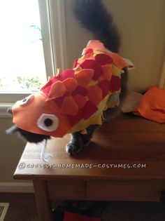 "Funny ""Cat""fish Costume... Coolest Halloween Costume Contest"