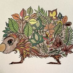 Johanna Basford | Picture by Sheri Morgan | Crayola Pencils 24 countColouring Gallery
