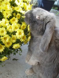 Bunny is thoroughly enjoying those flowers!