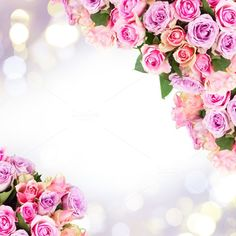 frame of fresh roses Rose Frame, Flower Frame, Flower Backgrounds, Flower Wallpaper, Sunflowers And Roses, Beautiful Flowers Wallpapers, Happy Eid, Floral Border, Be My Valentine