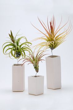 Airplantman brings you the 'AirplantVessel' tabletop accent in handmade ceramic. Each one includes both a hand wired airplant and perfectly matched vessel selected from the best of our changing variet