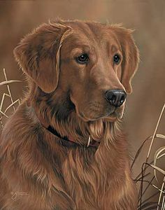 Loyal Companion-Golden Retriever Painting by Scot Storm
