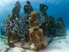Are you visiting the Cancun Underwater Museum? Then check out my guide to snorkelling & diving MUSA, the unique underwater museum in Mexico! Cozumel, Cancun Mexico, Bottom Of The Ocean, Under The Sea, Riviera Maya, Beach Club, Tulum, Scuba Diving Cancun, Sea Diving