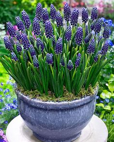 Container gardening is a fun way to add to the visual attraction of your home. You can use the terrific suggestions given here to start improving your garden or begin a new one today. Your garden is certain to bring you great satisfac Container Flowers, Container Plants, Container Gardening, Vegetable Gardening, Garden Bulbs, Garden Planters, Garden Shrubs, Garden Bed, Back Gardens