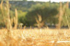 Untitled by Maria Giovanna Sodero on 500px fotografia Puglia Salento sud tricase