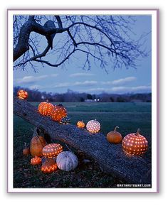 "Pumpkin ""lights"" Would look cool on the floor of the deck or railings at the WRYC"