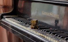 Danbo, Pianino