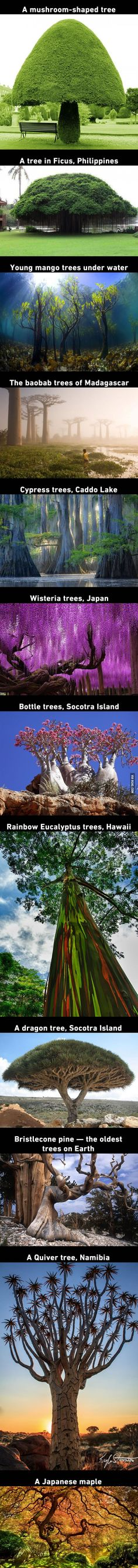 12 Beautiful Trees That You'd Thought They Grow On Pandora From Avatar - 9GAG