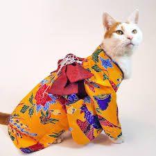 「着物猫」の画像検索結果