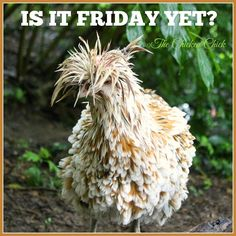 Friday Jokes, Friday Day, Happy Friday, Thursday Quotes, Its Friday Quotes, Work Memes, Work Humor, Beautiful Birds, Animals Beautiful