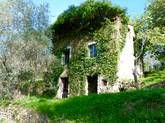 For sale in Perinaldo: South facing olive grove with Rustico and sea view