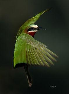Safarious - Birds in flight / Mark Drysdale / Gallery