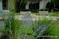 Russian sage and reed grass.