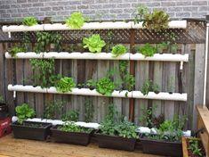 Zo begin jij jouw eigen verticale tuin!