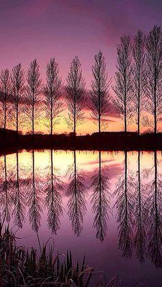Reflecting poplars