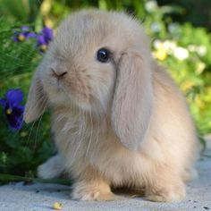 What a sweet baby! Baby Animals Super Cute, Cute Baby Bunnies, Cute Little Animals, Cute Funny Animals, Cute Bunny Pictures, Baby Animals Pictures, Cute Animal Photos, Fluffy Cows, Fluffy Animals
