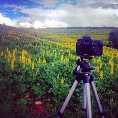 Spring on Extremadura, Spain. Extremadura en primavera. #timelapse #timelapsevideo #timelapsephotography #timelapser www.albertoexposito.net