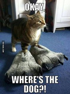 where is the dog #funny #cats