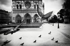 "Black and White Photography - Paris photograph, Notre Dame, birds,  Paris wall prints, architecture, home decor, travel - ""Heaven and Earth""..."
