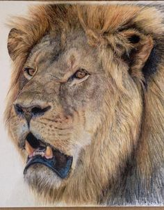 Portrait of Cecil by Charlotte Williams. Colored pencil. AVAILABLE AT AUCTION to support wildlife in Zimbabwe - click for link (8-26-15)