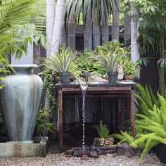 One of our Visual Merchandisers created this running tropical fountain display.  #rogersgardens #tropical #inthegarden