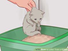 Image titled Litter Train a Kitten Step 6