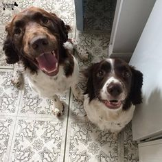 Did you say dinner time? #DoggyMember Kaizer and Skelly