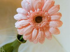 Handmade Paper Gerbera Daisy Single Flower by RosyPaperPosies