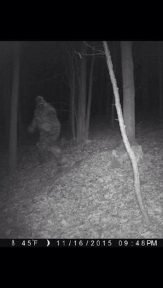 Bigfoot on a game warden's trail cam