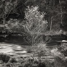 Fay Godwin's photograph of a silver birch by a stream was taken in Inverkirkaig British photographer Fay Godwin is best known for her black and white landscape photography. Nature Photography Tips, Stunning Photography, Black And White Landscape, Black White, Landscape Pictures, British Library, Landscape Photographers, Black And White Photography, Beautiful Landscapes