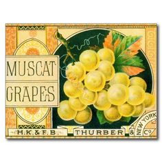 vintage labels | Muscat Grapes, Vintage Fruit Crate Label Art Postcard from Zazzle.com