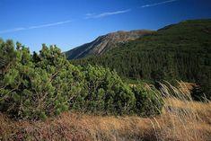 Babia Góra (Beskidy Zachodnie)