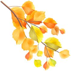 Autumn Branch PNG Clip Art Image​ | Gallery Yopriceville - High-Quality Images and Transparent PNG Free Clipart