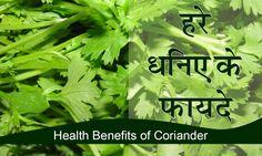 हरे धनिए के फायदे   Amazing Health Benefits of Coriander in Hindi