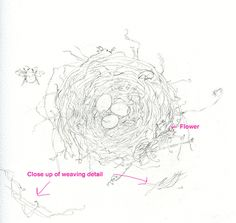 How to Draw a Bird's Nest and Add Color