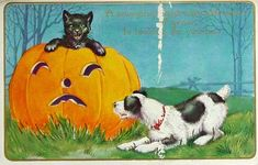 This vintage Halloween postcard has a black cat peeking out of a jack o' lantern and greeting a dog.