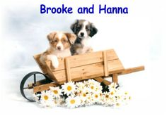 Brooke and Hanna from Rocky Top Kennels