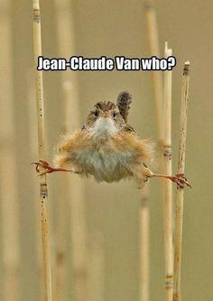 30 Funny animal captions - part 18 (30 pics)