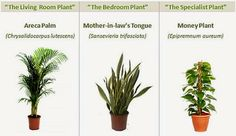 8 Powerful Plants That Detox the Air in Your Home (Guide)