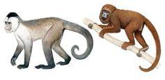 macaco-prego-de-peito-amarelo e bugio