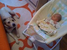 Bringing baby home to the dogs. Good tips