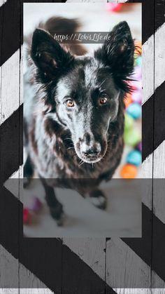 So machst du die tägliche Fütterung zu einem Abenteuer für deinen Hund und stärkst ganz nebenbei eure Bindung! | #Hund #Auslastung #Beschäftigung #Spiele #DIY Cane Corso, Trainers, Memories, Diy, Routine, Animals Dog, Wild Animals, Pets, Cats