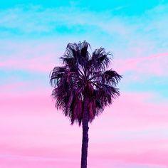 Candy Sunset Palm