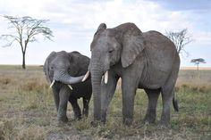 #4k wallpaper elephant (3872x2592)
