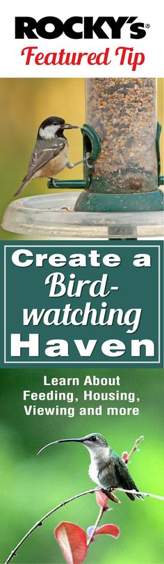 Create a Birdwatching Haven in your Backyard with these tips from #RockysACE