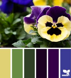 Pansy Palette - http://design-seeds.com/home/entry/pansy-palette