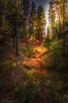 "novice-at-play: "" ""Autumn burned brightly, a running flame through the mountains, a torch flung to the trees. Beautiful Forest, Beautiful World, Environment Concept Art, All Nature, My Images, Mother Nature, Natural Beauty, Around The Worlds, Pictures"