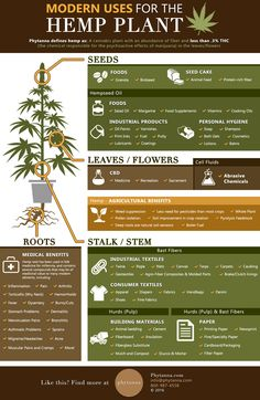As you can see, each and every single portion of the hemp plant can be used to our benefit. This includes: hemp seeds, hemp leaves, stem, and even roots. Marijuana Plants, Cannabis Plant, Hemp Recipe, Hemp Leaf, Medical Cannabis, Hemp Seeds, Hemp Oil, Arthritis, Medical Marijuana